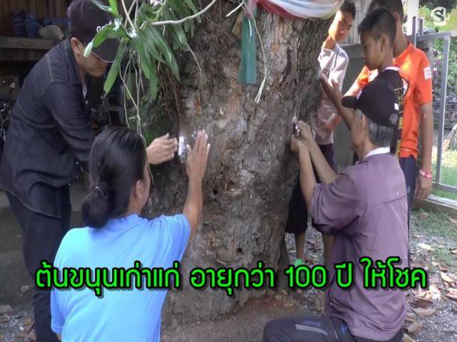 หวยเด็ด ต้นขนุนเก่าแก่ 100ปี ให้โชค