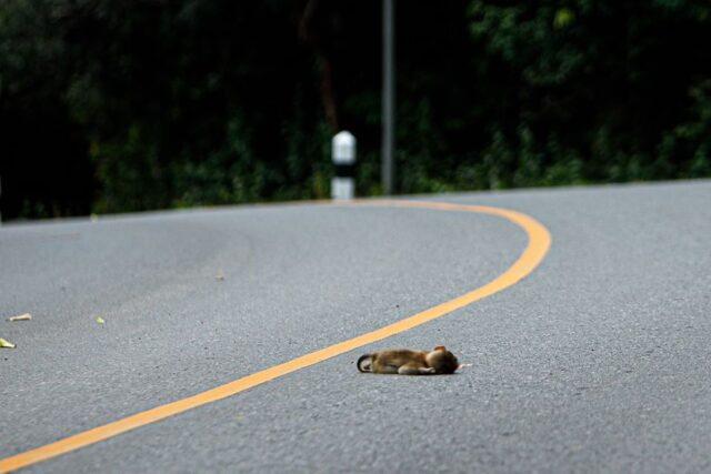 สลด รถชน ลูกลิงกัง2