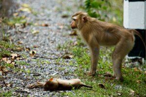 สลด รถชน ลูกลิงกัง